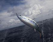 Sainsbury's own-brand Maldives tuna to become 100% sustainable